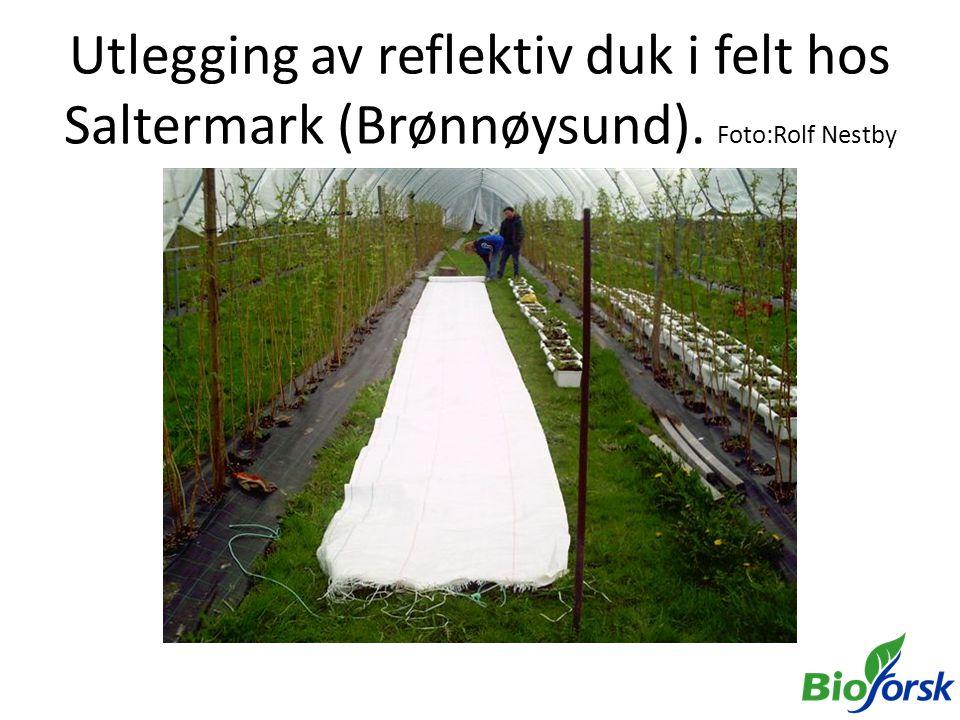 Utlegging av reflektiv duk i felt hos Saltermark (Brønnøysund)