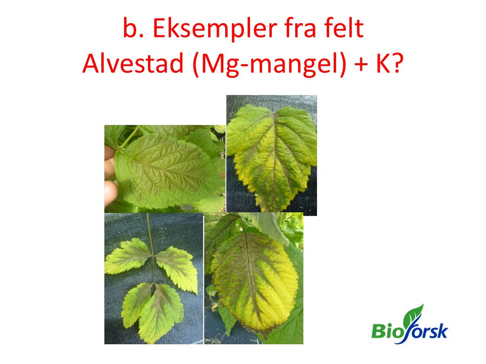 b. Eksempler fra felt Alvestad (Mg-mangel) + K