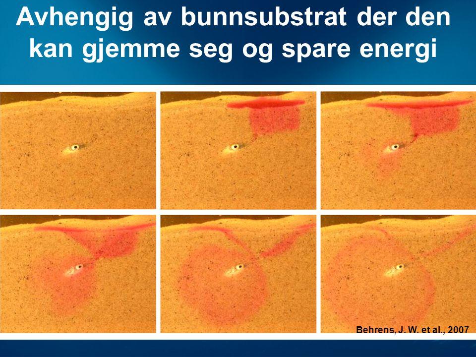 Avhengig av bunnsubstrat der den kan gjemme seg og spare energi