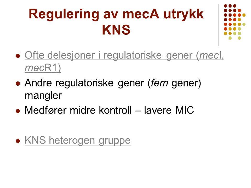 Regulering av mecA utrykk KNS