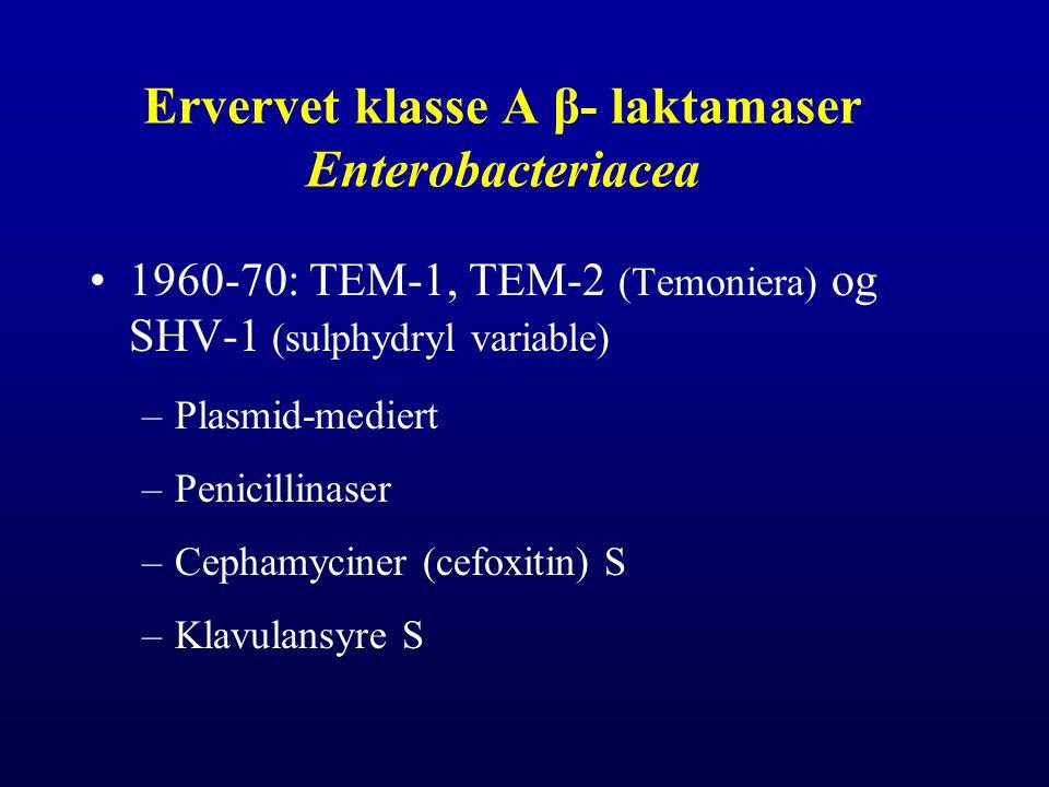 Ervervet klasse A β- laktamaser Enterobacteriacea