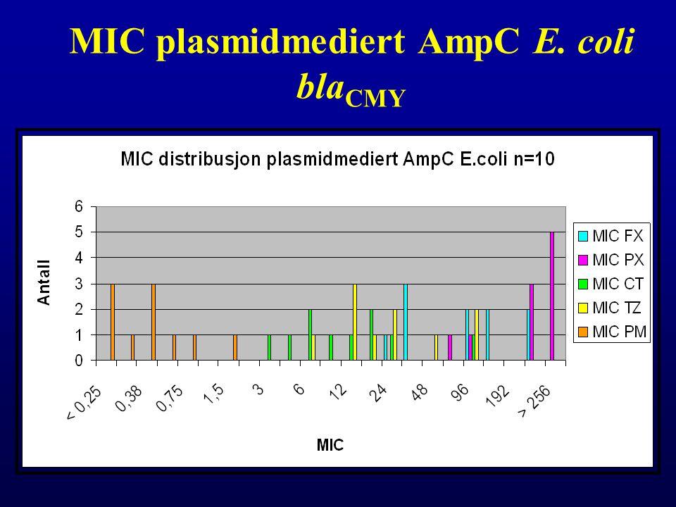 MIC plasmidmediert AmpC E. coli blaCMY