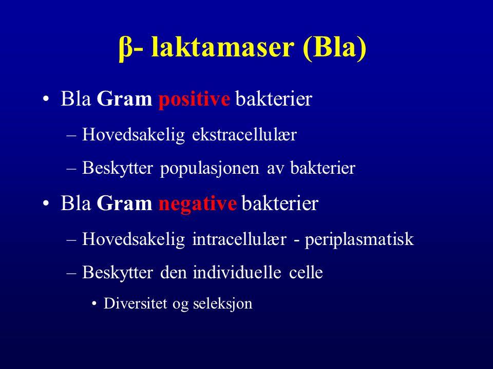 β- laktamaser (Bla) Bla Gram positive bakterier