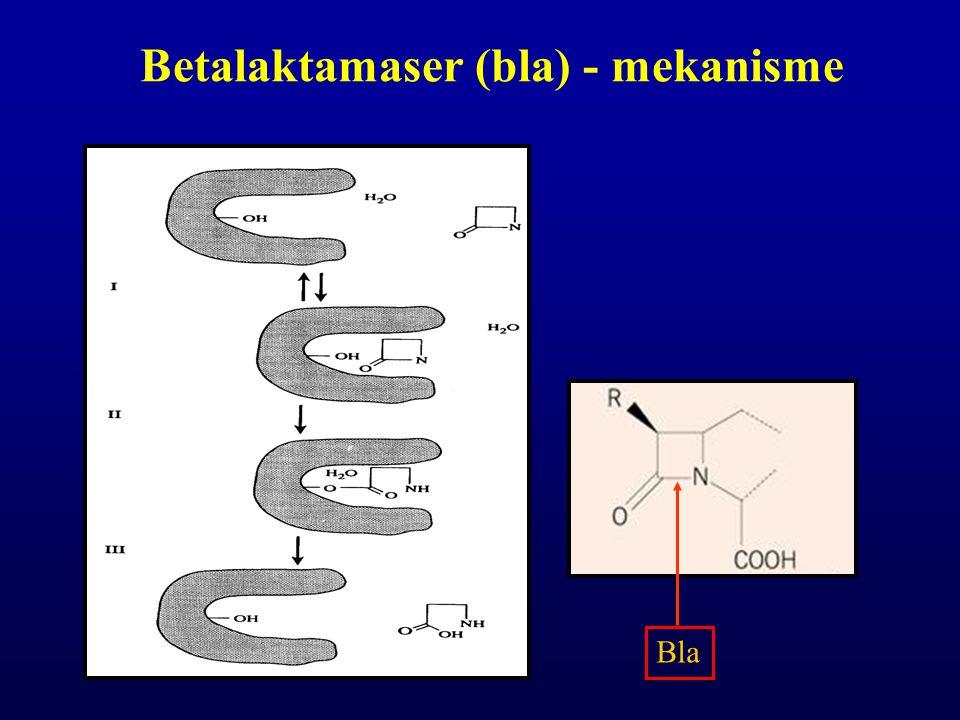 Betalaktamaser (bla) - mekanisme