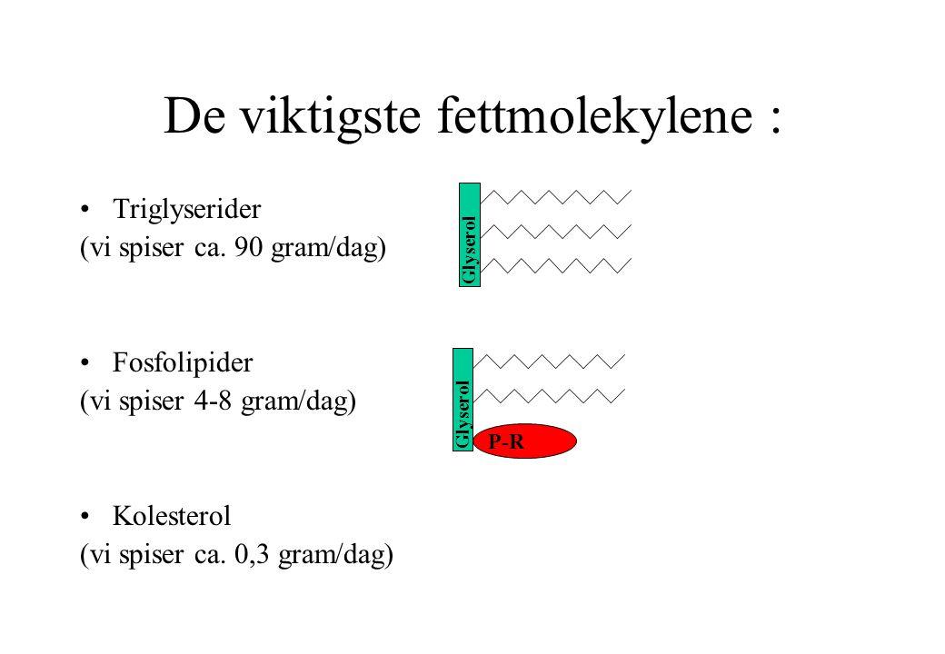 De viktigste fettmolekylene :