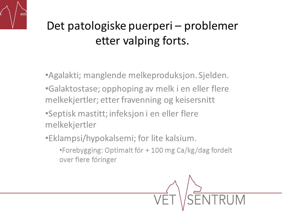 Det patologiske puerperi – problemer etter valping forts.