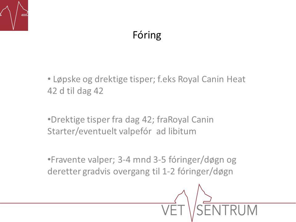 Fóring Løpske og drektige tisper; f.eks Royal Canin Heat 42 d til dag 42.