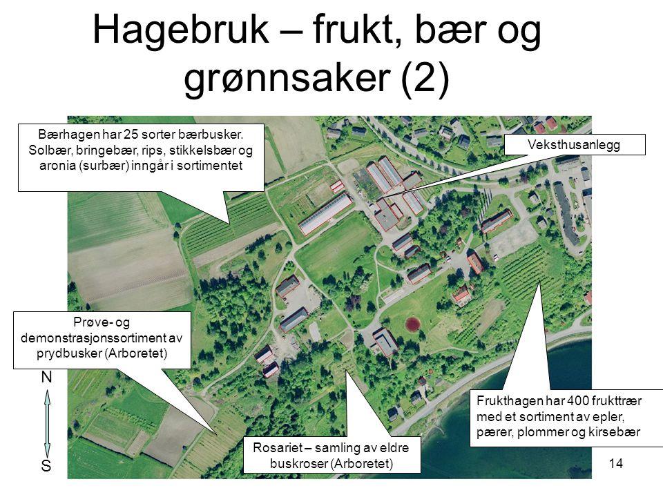 Hagebruk – frukt, bær og grønnsaker (2)