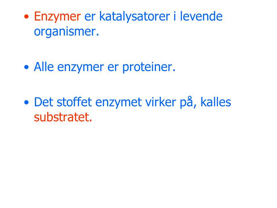 Enzymer er katalysatorer i levende organismer.