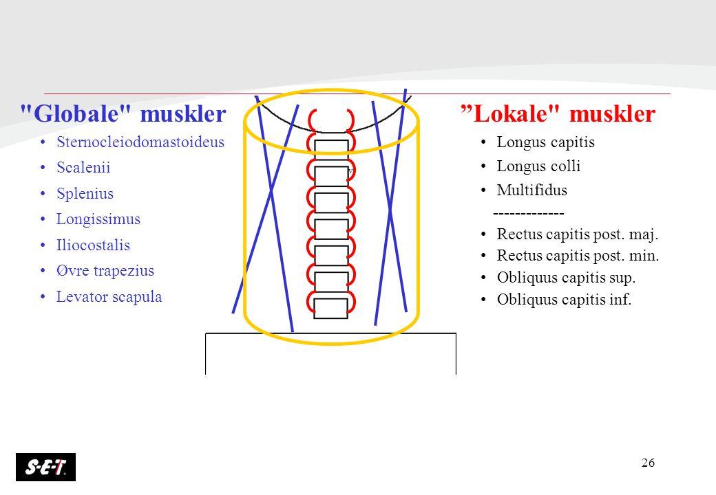 Globale muskler Lokale muskler Sternocleiodomastoideus Scalenii