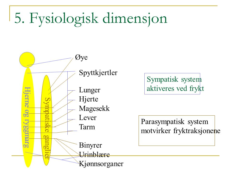 5. Fysiologisk dimensjon