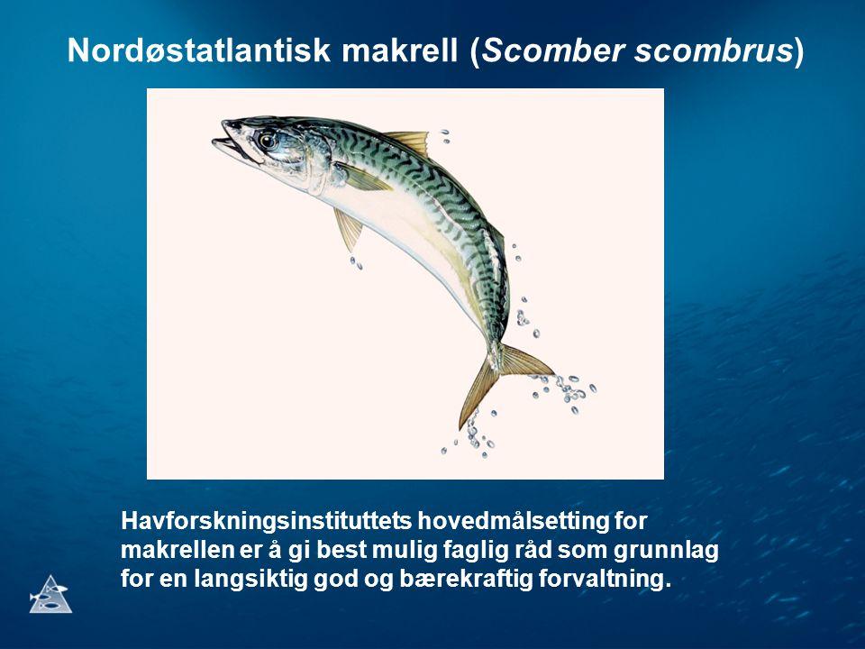 Nordøstatlantisk makrell (Scomber scombrus)