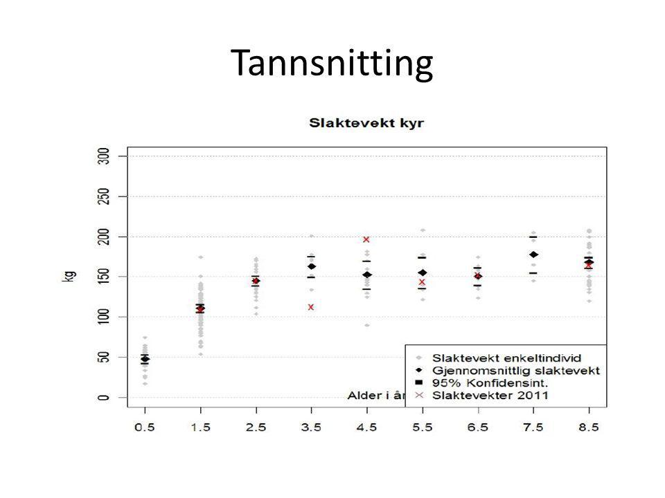 Tannsnitting