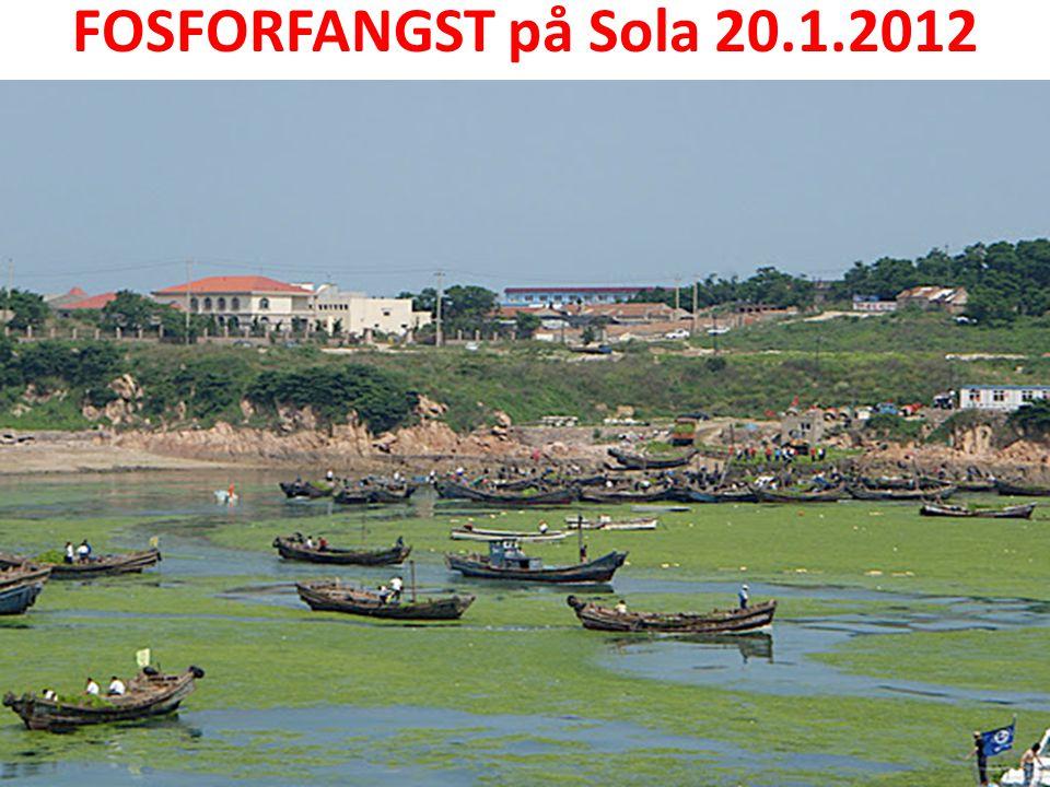 FOSFORFANGST på Sola 20.1.2012