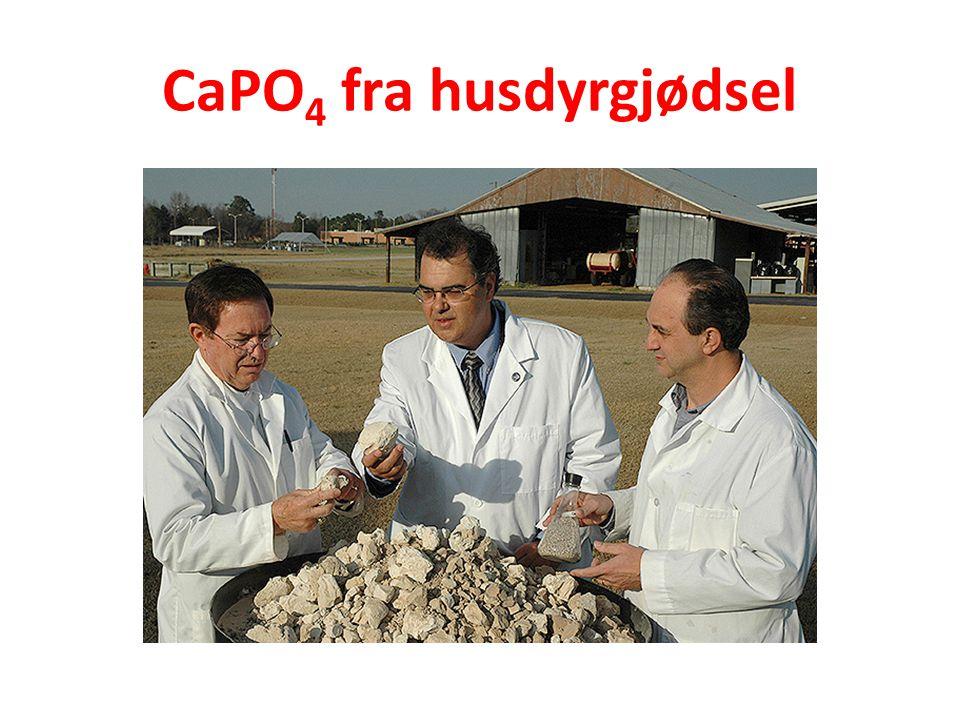 CaPO4 fra husdyrgjødsel