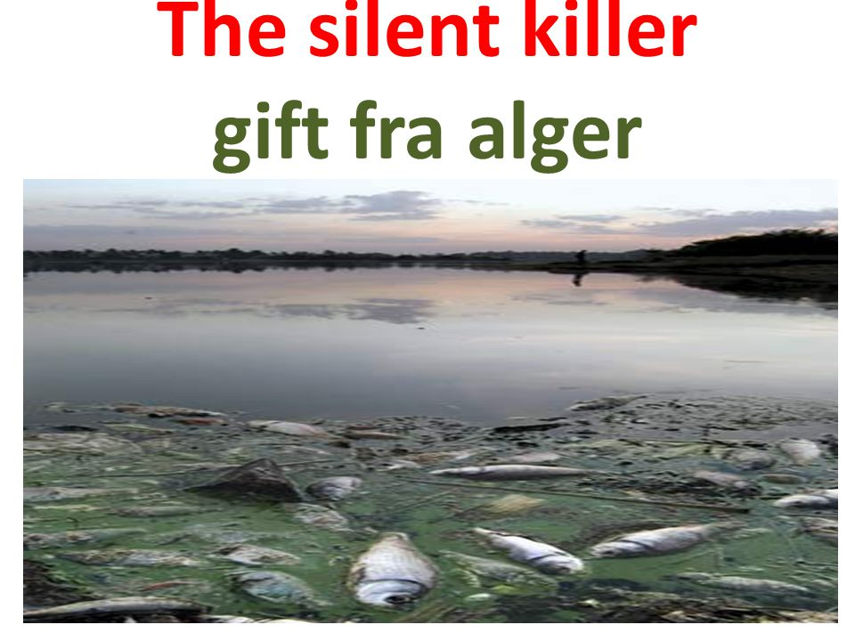 The silent killer gift fra alger