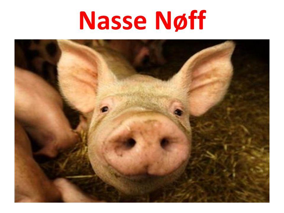 Nasse Nøff