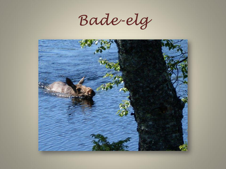 Bade-elg