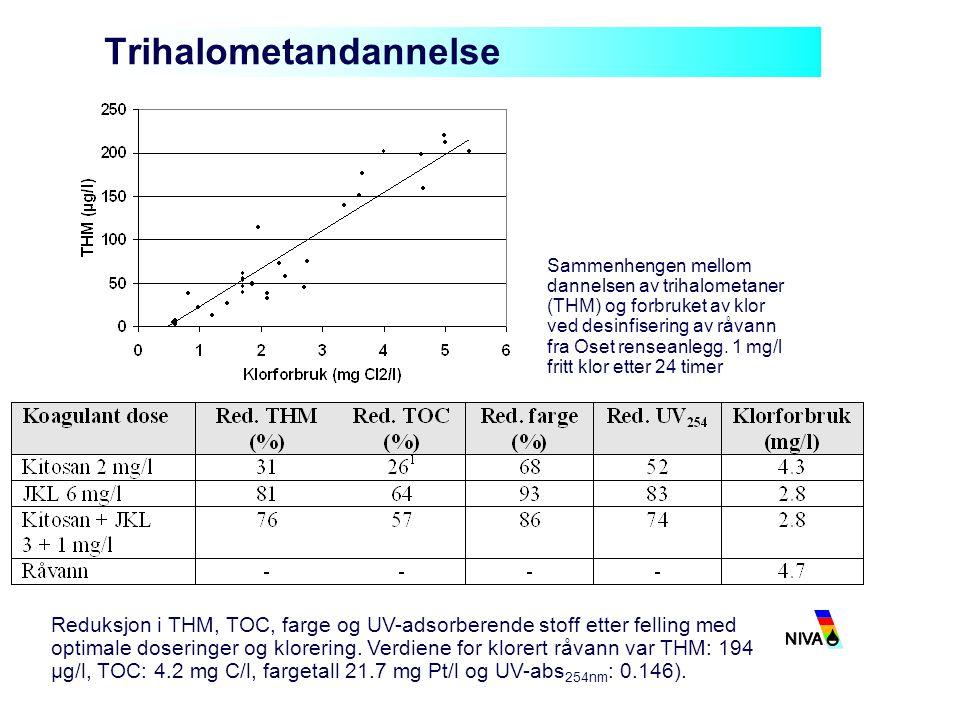 Trihalometandannelse