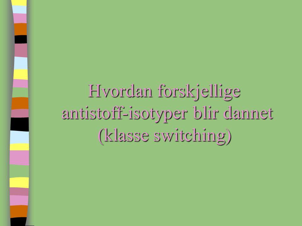 antistoff-isotyper blir dannet