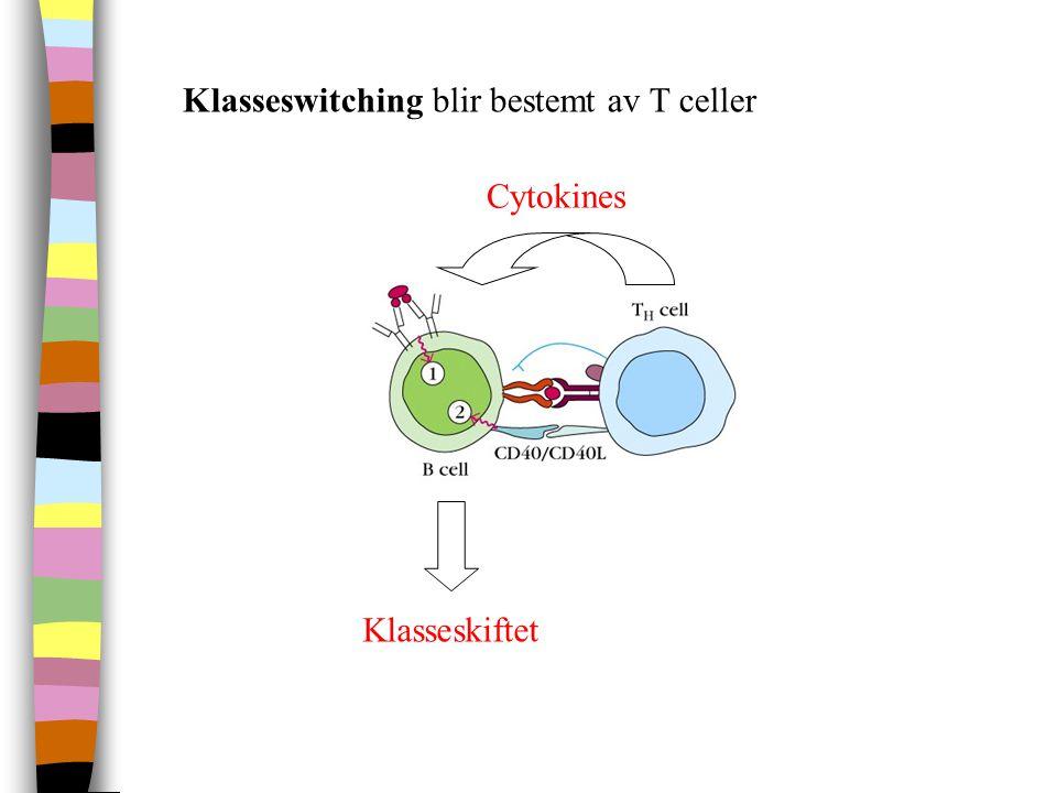 Klasseswitching blir bestemt av T celler