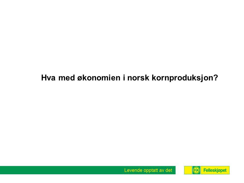 Hva med økonomien i norsk kornproduksjon