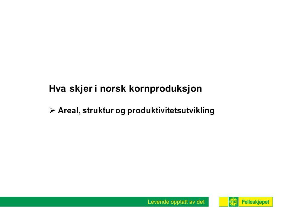 Hva skjer i norsk kornproduksjon