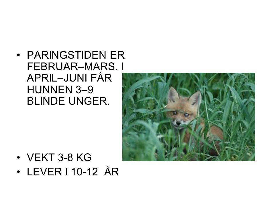 PARINGSTIDEN ER FEBRUAR–MARS. I APRIL–JUNI FÅR HUNNEN 3–9 BLINDE UNGER.