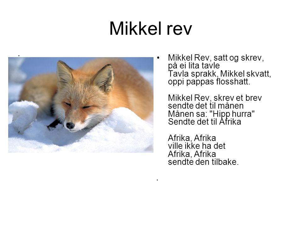 Mikkel rev