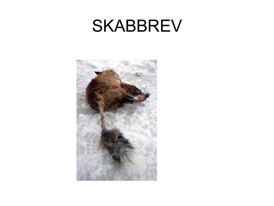 SKABBREV