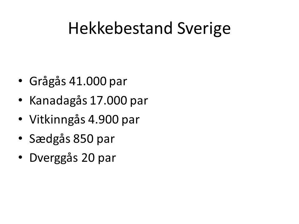 Hekkebestand Sverige Grågås 41.000 par Kanadagås 17.000 par