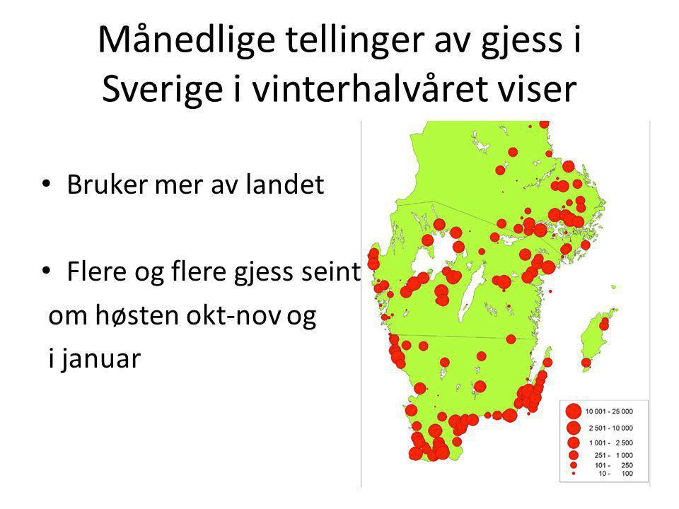Månedlige tellinger av gjess i Sverige i vinterhalvåret viser