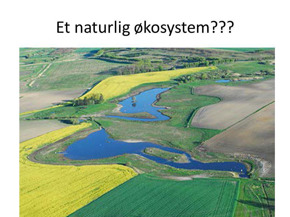 Et naturlig økosystem