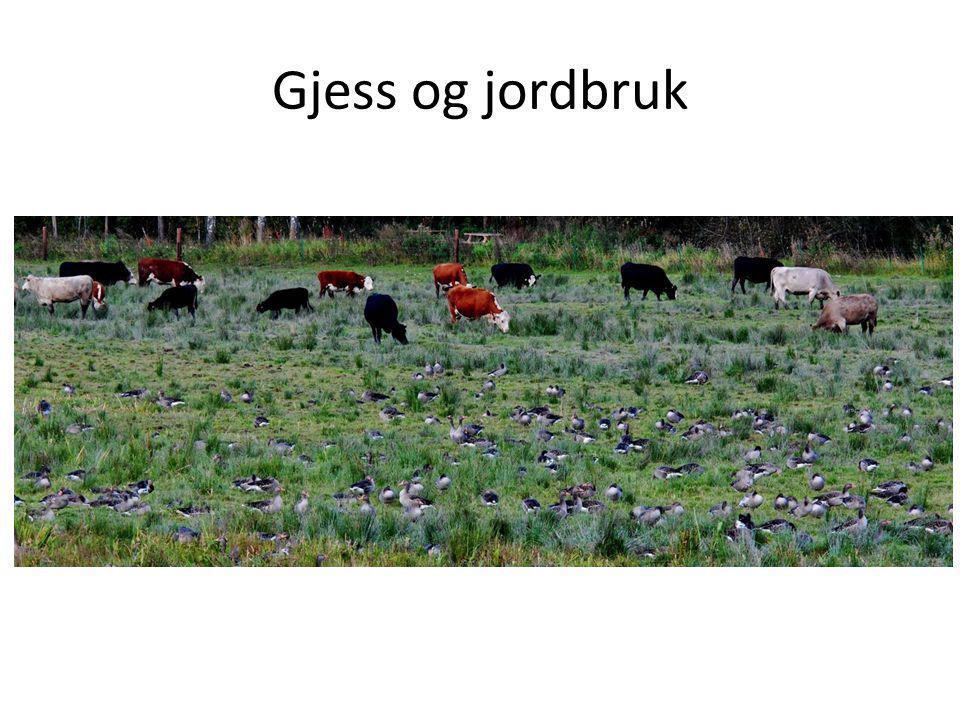 Gjess og jordbruk