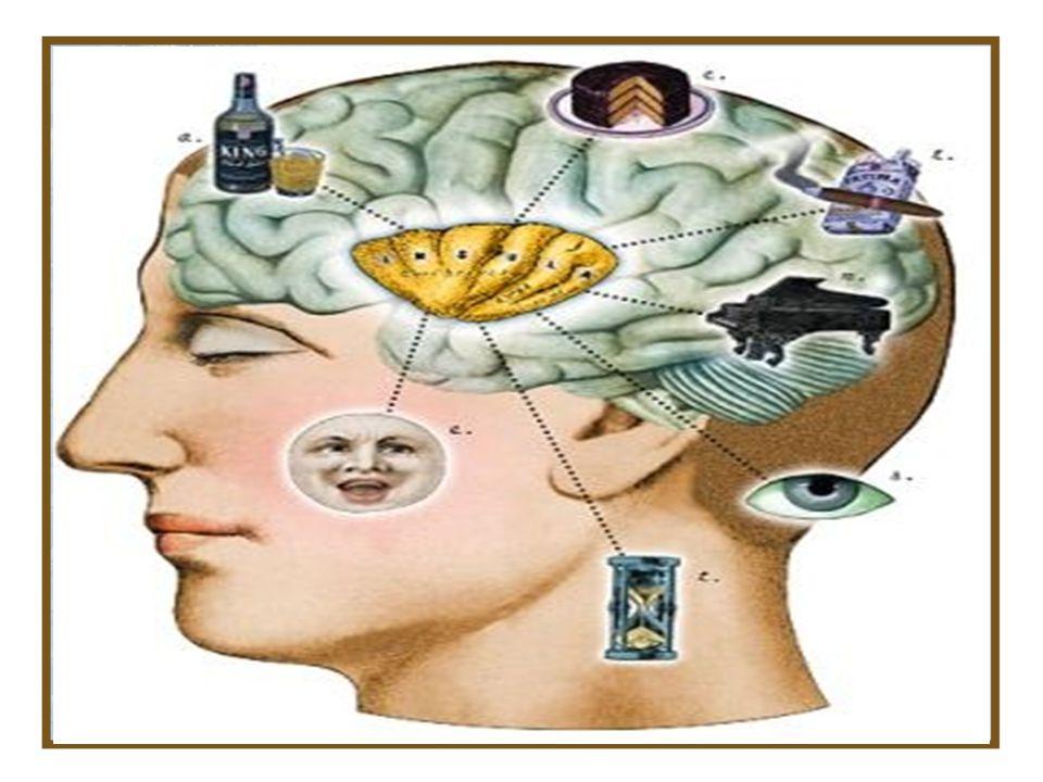 Insula er ikke tilgjengelig fra hjernens utside. Får info