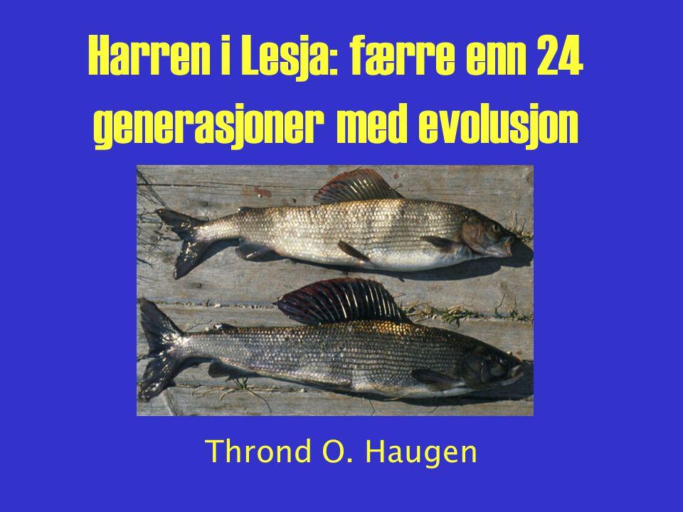 Harren i Lesja: færre enn 24 generasjoner med evolusjon