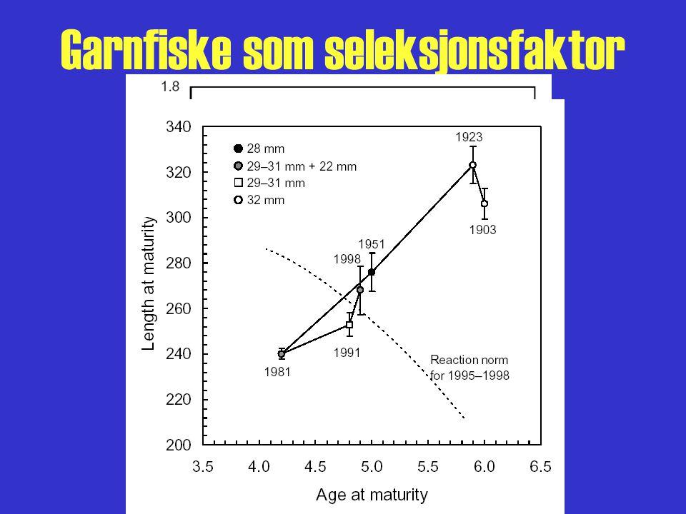 Garnfiske som seleksjonsfaktor