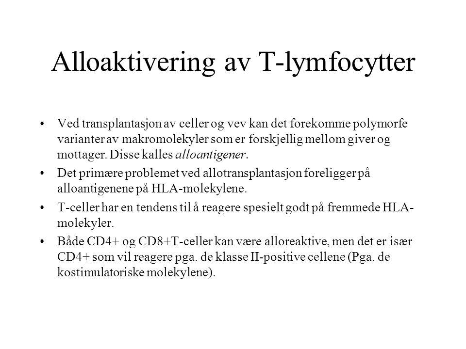Alloaktivering av T-lymfocytter