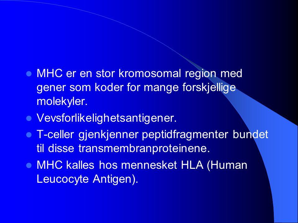 MHC er en stor kromosomal region med gener som koder for mange forskjellige molekyler.