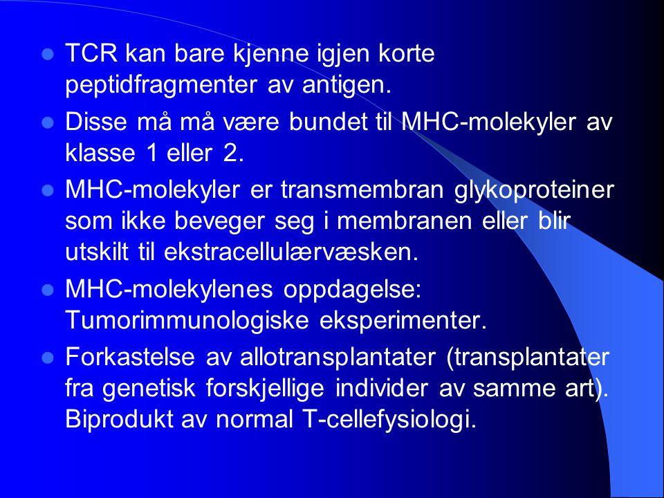 TCR kan bare kjenne igjen korte peptidfragmenter av antigen.