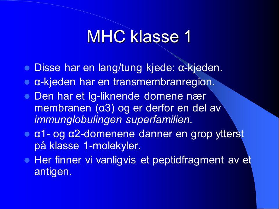 MHC klasse 1 Disse har en lang/tung kjede: α-kjeden.