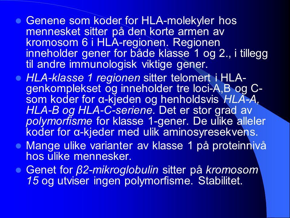 Genene som koder for HLA-molekyler hos mennesket sitter på den korte armen av kromosom 6 i HLA-regionen. Regionen inneholder gener for både klasse 1 og 2., i tillegg til andre immunologisk viktige gener.
