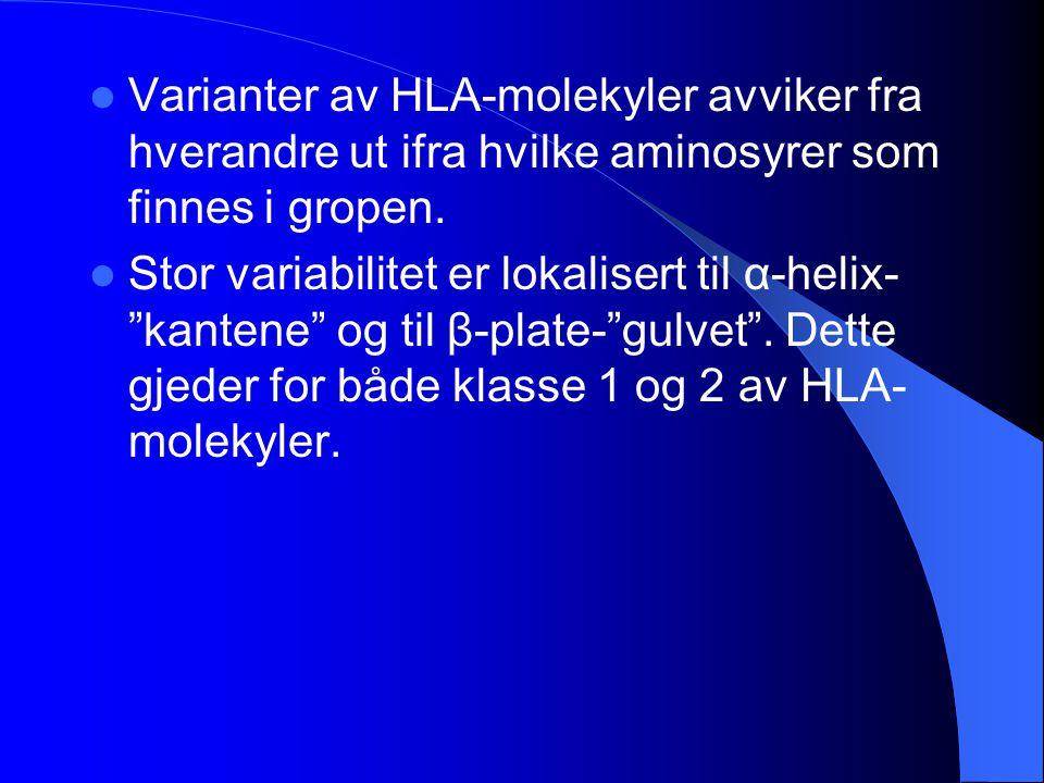 Varianter av HLA-molekyler avviker fra hverandre ut ifra hvilke aminosyrer som finnes i gropen.