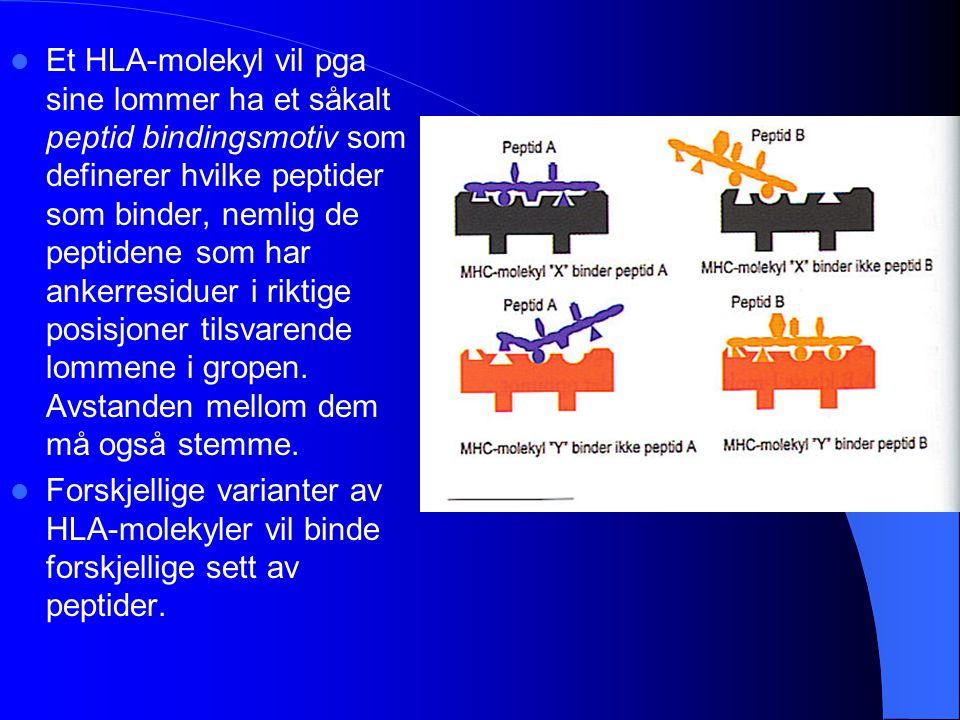Et HLA-molekyl vil pga sine lommer ha et såkalt peptid bindingsmotiv som definerer hvilke peptider som binder, nemlig de peptidene som har ankerresiduer i riktige posisjoner tilsvarende lommene i gropen. Avstanden mellom dem må også stemme.