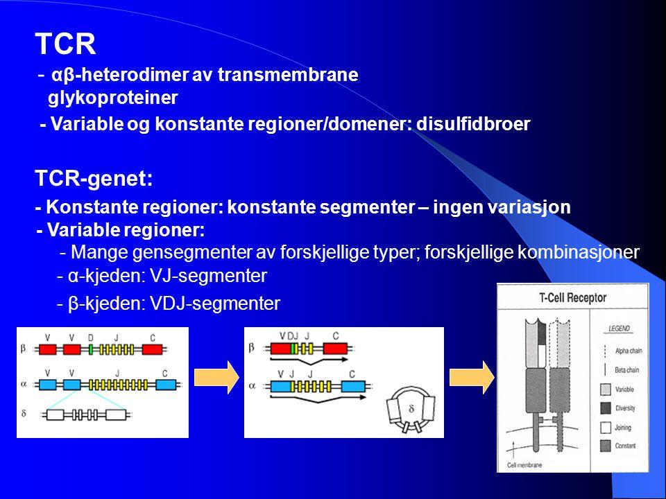 TCR αβ-heterodimer av transmembrane TCR-genet: glykoproteiner
