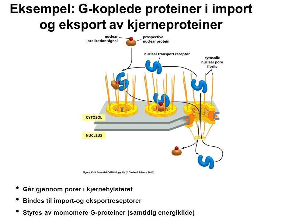Eksempel: G-koplede proteiner i import og eksport av kjerneproteiner