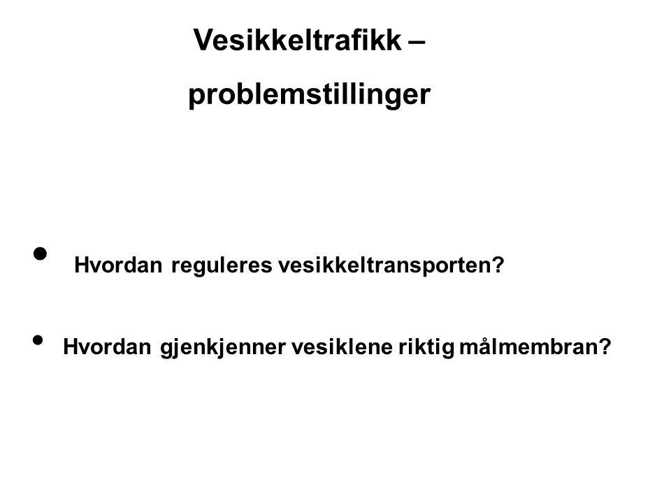 Vesikkeltrafikk – problemstillinger