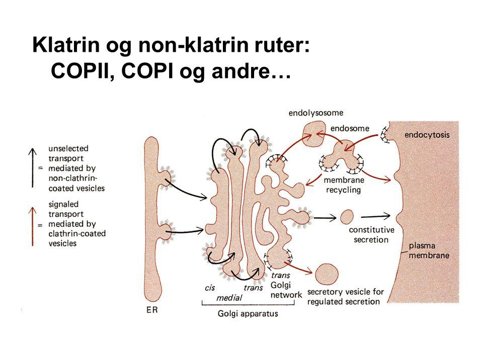 Klatrin og non-klatrin ruter: COPII, COPI og andre…