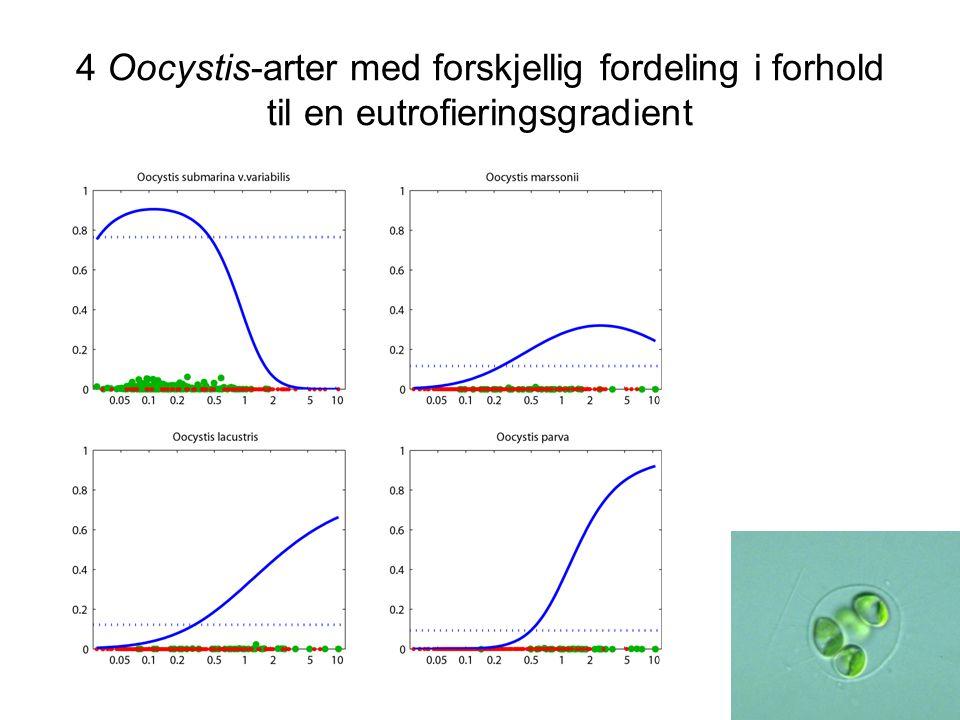 4 Oocystis-arter med forskjellig fordeling i forhold til en eutrofieringsgradient