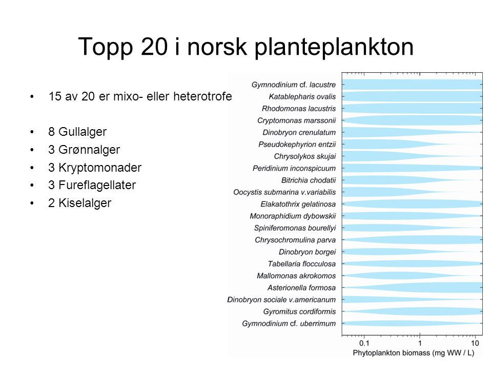 Topp 20 i norsk planteplankton
